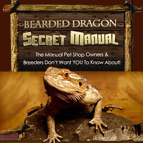 Bearded Dragon Secret Manual - Breeders don't want you to know about