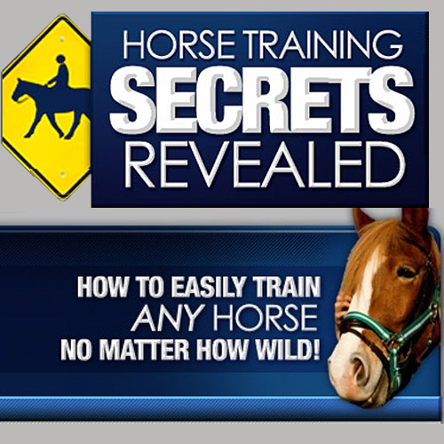 Horse Training Secrets - How to easily train any horse