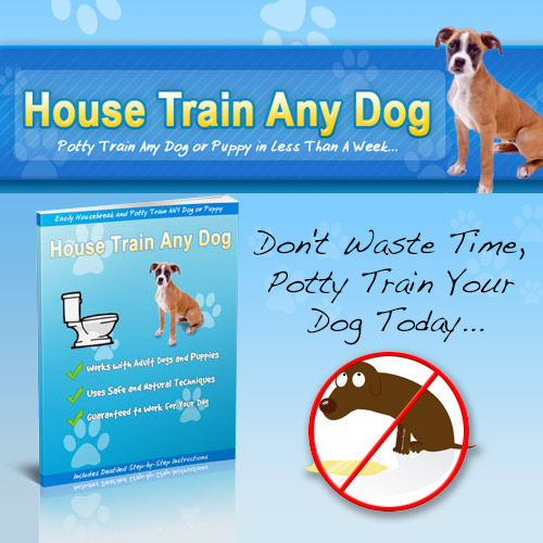 House Train Any Dog - Don't waste time, potty train your dog today