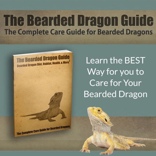 The Bearded Dragon Guide - Learn the best way