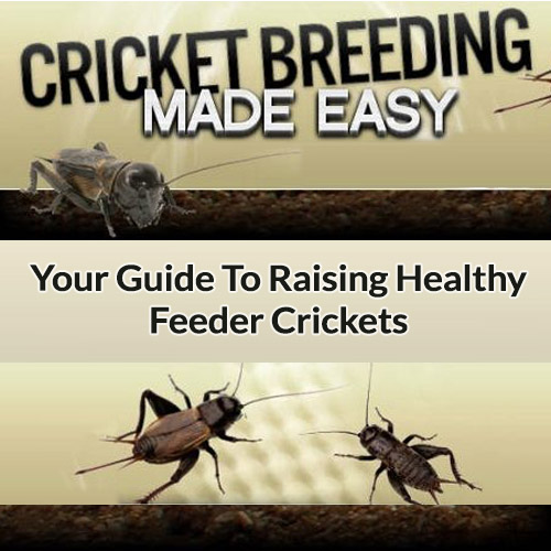Buy Cricket Breeding Made Easy